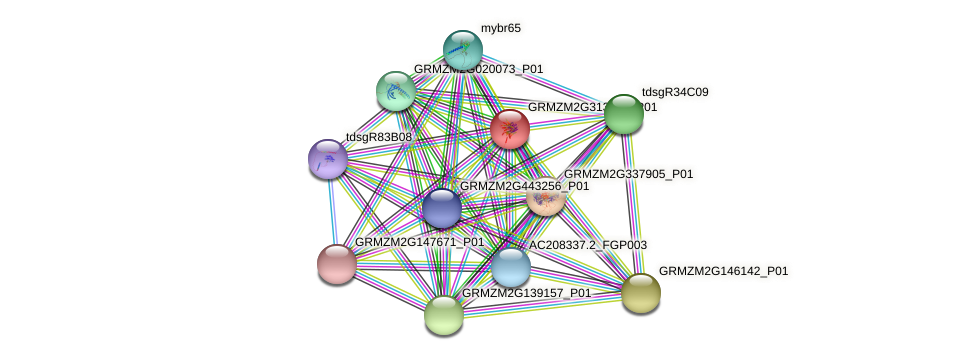GRMZM2G313761_P01 protein (Zea mays) - STRING interaction network