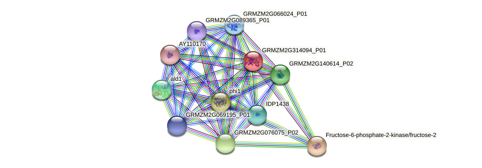 GRMZM2G314094_P01 protein (Zea mays) - STRING interaction network