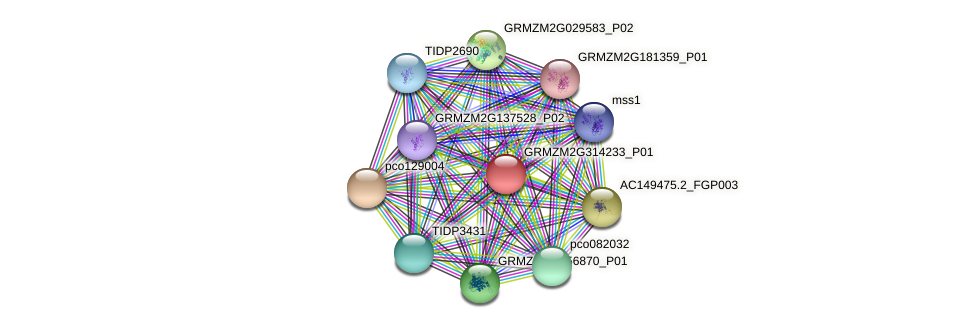 GRMZM2G314233_P01 protein (Zea mays) - STRING interaction network