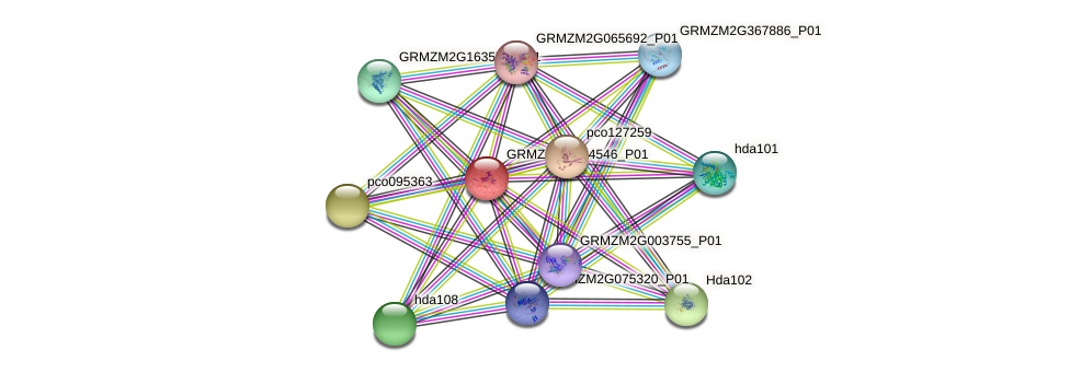 hox3 protein (Zea mays) - STRING interaction network