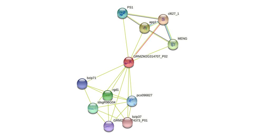 Zm.1810 protein (Zea mays) - STRING interaction network