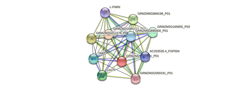 GRMZM2G315121_P01 protein (Zea mays) - STRING interaction network