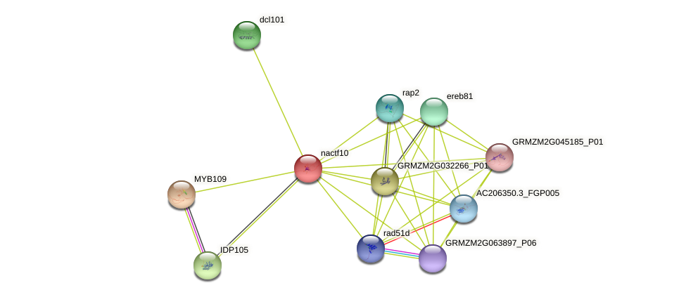 nac10 protein (Zea mays) - STRING interaction network