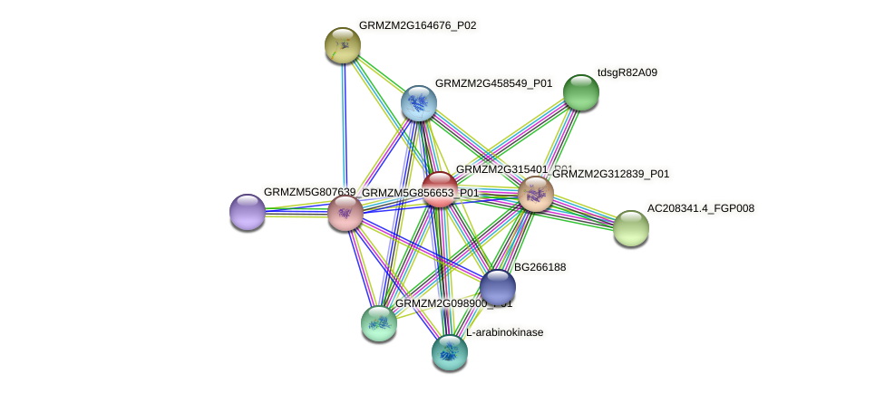 GRMZM2G315401_P01 protein (Zea mays) - STRING interaction network