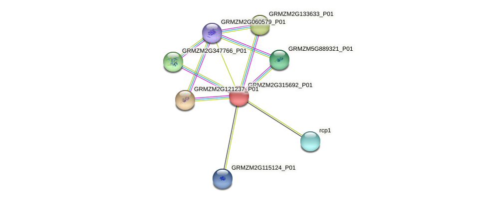 GRMZM2G315692_P01 protein (Zea mays) - STRING interaction network
