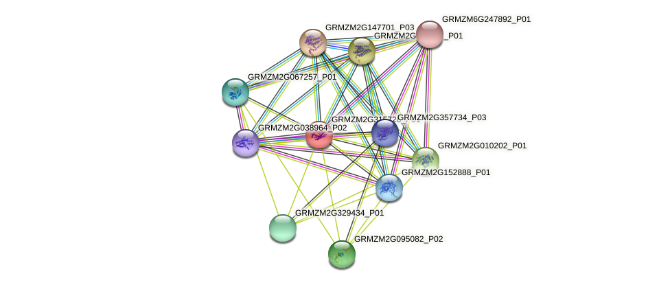 GRMZM2G315726_P01 protein (Zea mays) - STRING interaction network