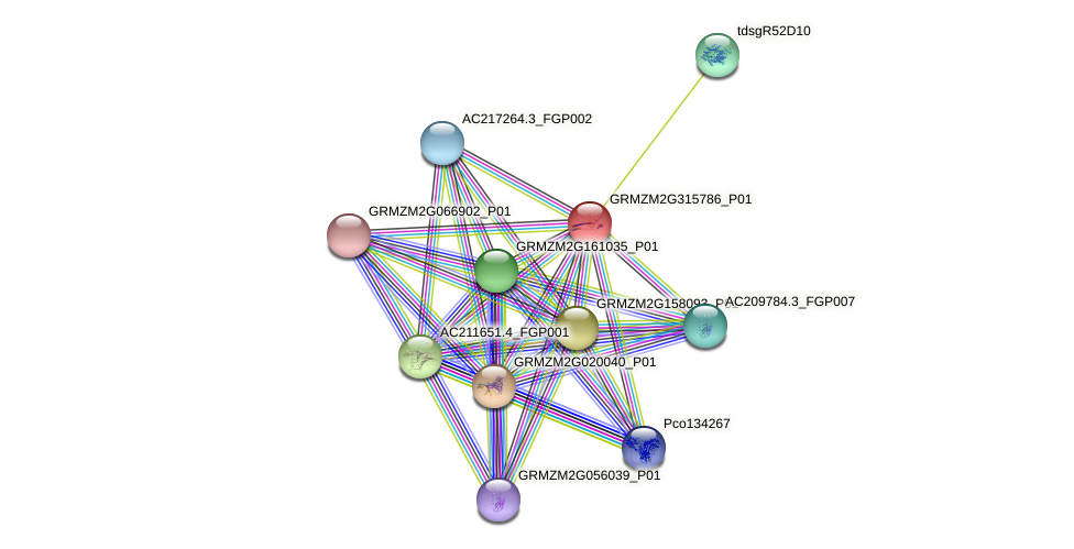 GRMZM2G315786_P01 protein (Zea mays) - STRING interaction network