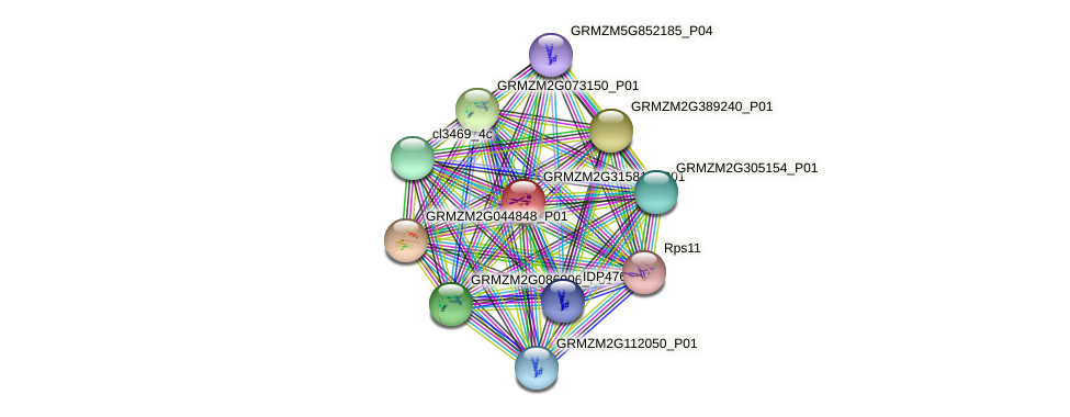GRMZM2G315812_P01 protein (Zea mays) - STRING interaction network