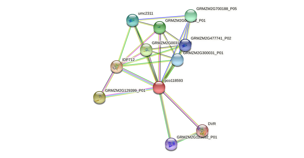 pco118593 protein (Zea mays) - STRING interaction network
