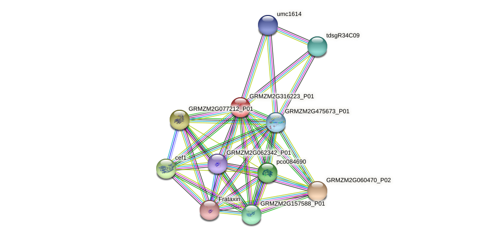 GRMZM2G316223_P01 protein (Zea mays) - STRING interaction network