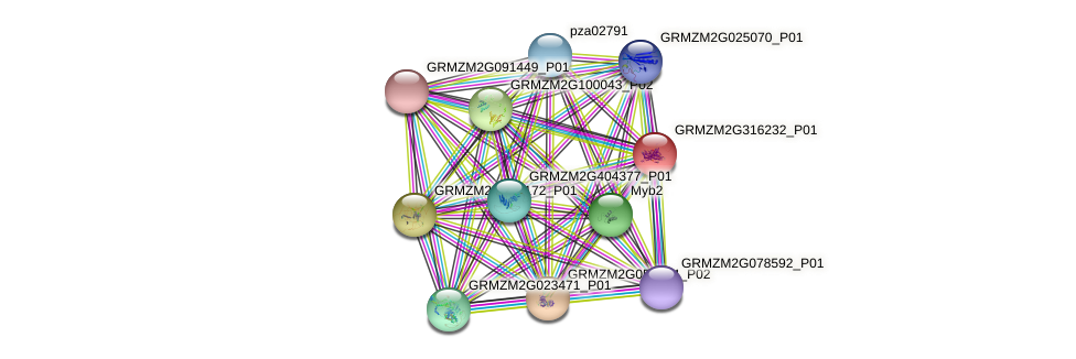 Zm.43566 protein (Zea mays) - STRING interaction network