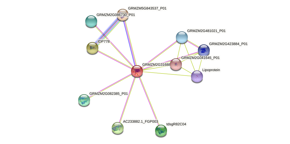 GRMZM2G316889_P01 protein (Zea mays) - STRING interaction network