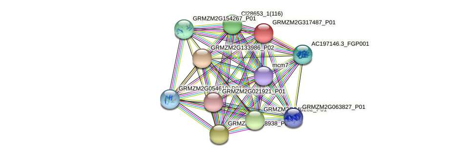 GRMZM2G317487_P01 protein (Zea mays) - STRING interaction network