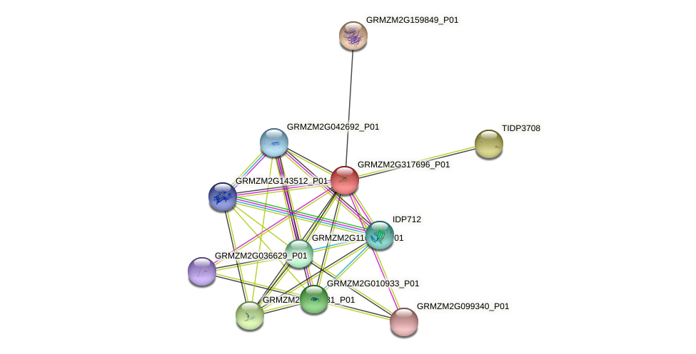 GRMZM2G317696_P01 protein (Zea mays) - STRING interaction network