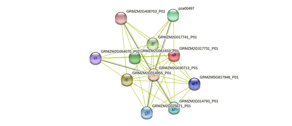 GRMZM2G317731_P01 protein (Zea mays) - STRING interaction network