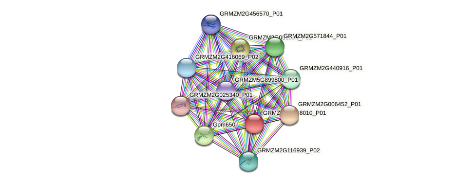 GRMZM2G318010_P01 protein (Zea mays) - STRING interaction network