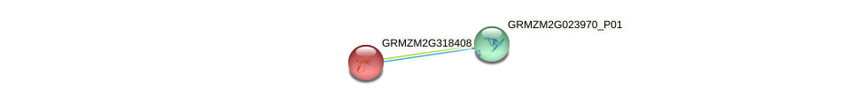 GRMZM2G318408_P01 protein (Zea mays) - STRING interaction network
