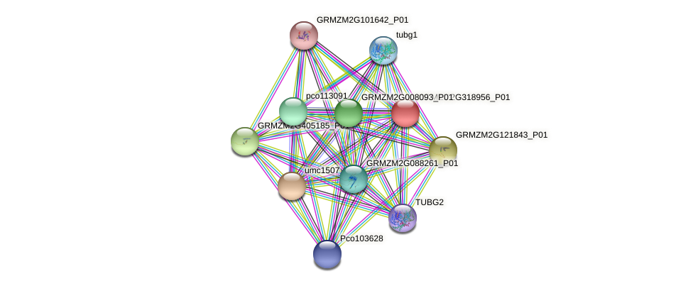 GRMZM2G318956_P01 protein (Zea mays) - STRING interaction network