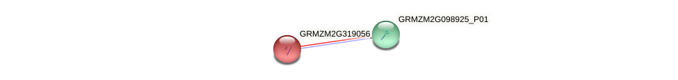 GRMZM2G319056_P01 protein (Zea mays) - STRING interaction network