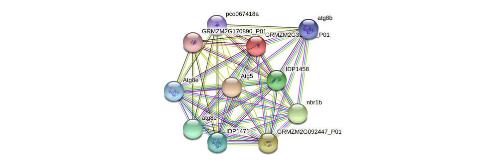 GRMZM2G319109_P01 protein (Zea mays) - STRING interaction network