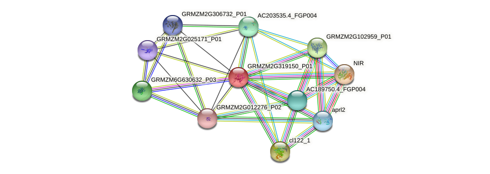 GRMZM2G319150_P01 protein (Zea mays) - STRING interaction network