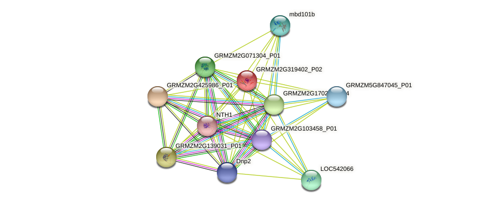 GRMZM2G319402_P02 protein (Zea mays) - STRING interaction network