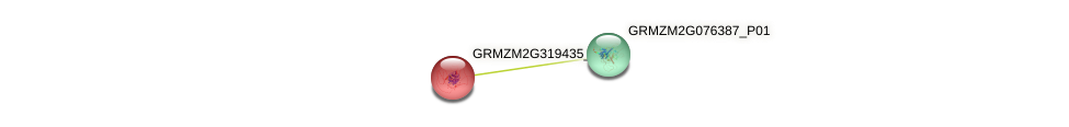 GRMZM2G319435_P01 protein (Zea mays) - STRING interaction network