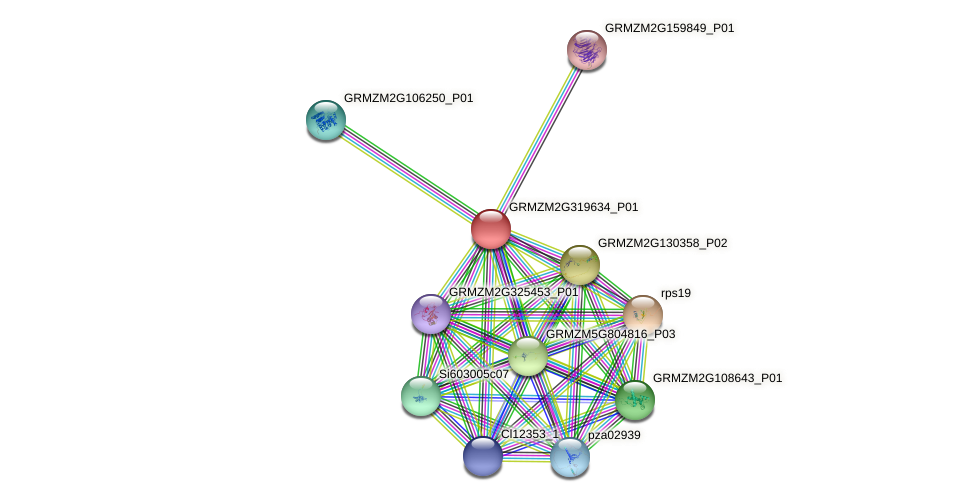 GRMZM2G319634_P01 protein (Zea mays) - STRING interaction network