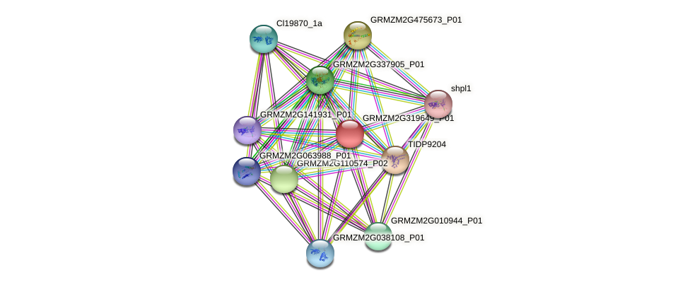 GRMZM2G319649_P01 protein (Zea mays) - STRING interaction network