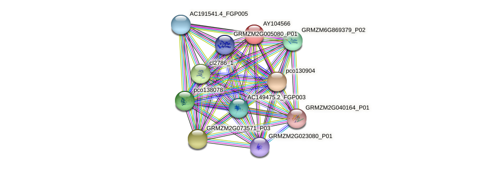 AY104566 protein (Zea mays) - STRING interaction network