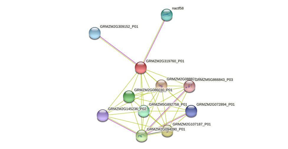 GRMZM2G319760_P01 protein (Zea mays) - STRING interaction network