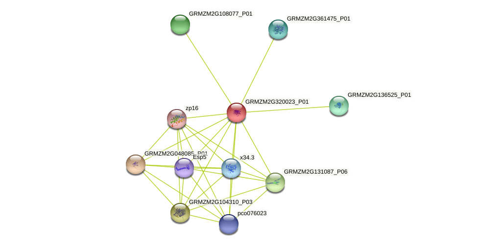 GRMZM2G320023_P01 protein (Zea mays) - STRING interaction network