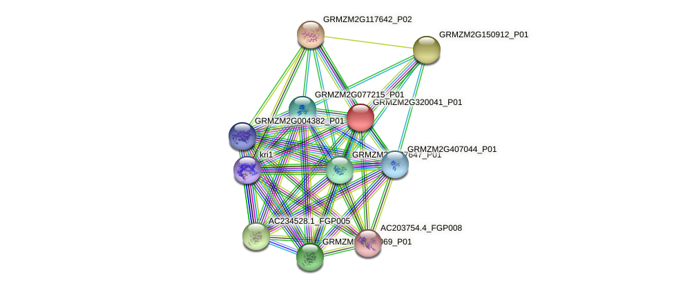 GRMZM2G320041_P01 protein (Zea mays) - STRING interaction network