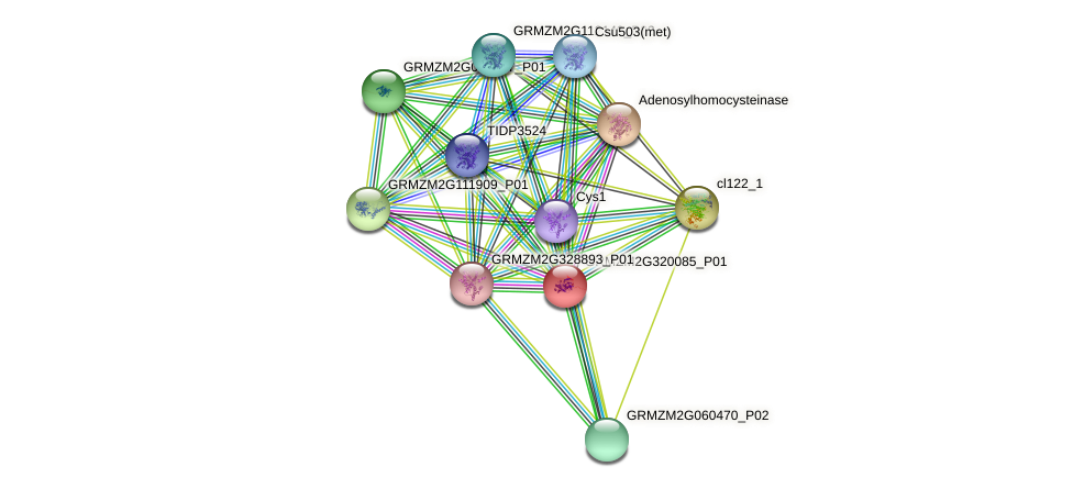 GRMZM2G320085_P01 protein (Zea mays) - STRING interaction network