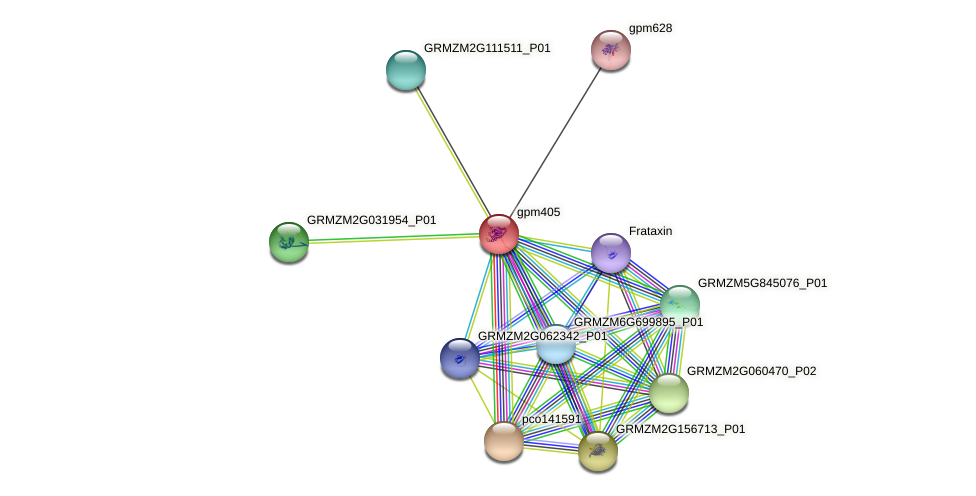 gpm405 protein (Zea mays) - STRING interaction network