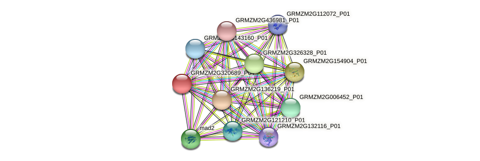 Zm.4944 protein (Zea mays) - STRING interaction network