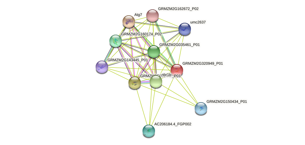 GRMZM2G320949_P01 protein (Zea mays) - STRING interaction network
