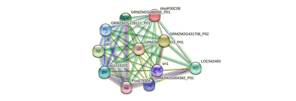 GRMZM2G321717_P01 protein (Zea mays) - STRING interaction network