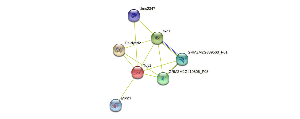 Tdy1 protein (Zea mays) - STRING interaction network