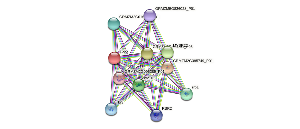 cpp5 protein (Zea mays) - STRING interaction network