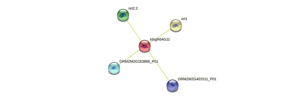 GRMZM2G322220_P01 protein (Zea mays) - STRING interaction network