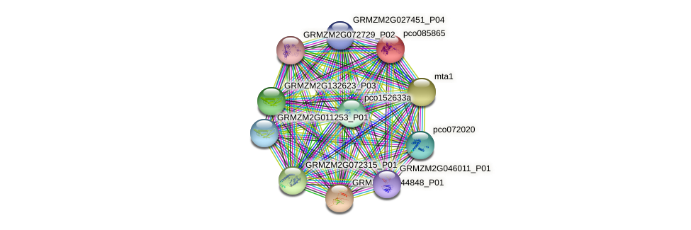 pco085865 protein (Zea mays) - STRING interaction network