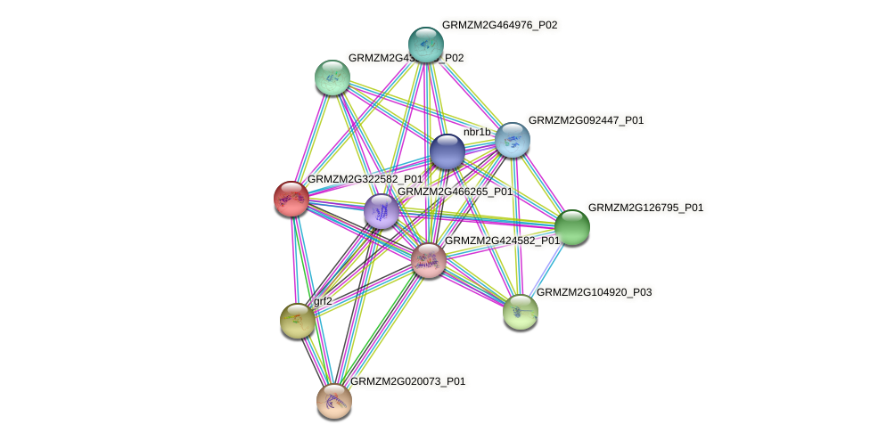 GRMZM2G322582_P01 protein (Zea mays) - STRING interaction network