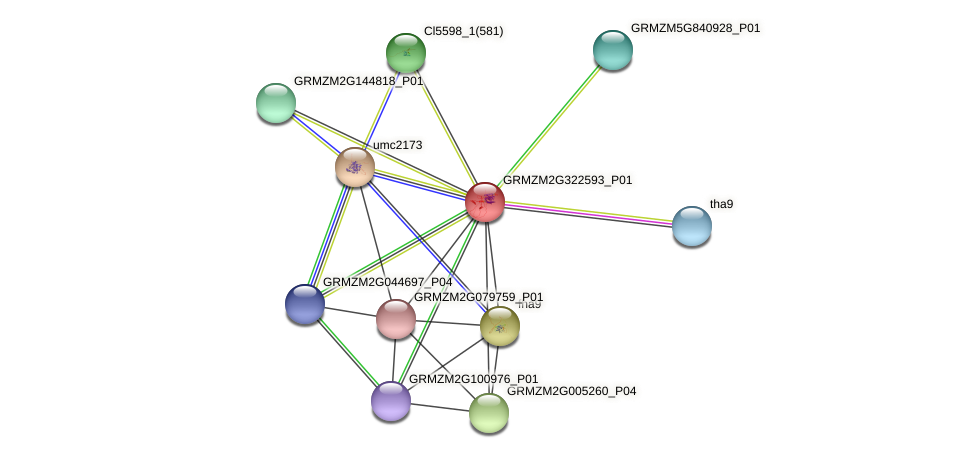 Zm.126128 protein (Zea mays) - STRING interaction network