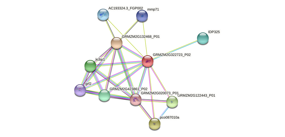GRMZM2G322723_P02 protein (Zea mays) - STRING interaction network