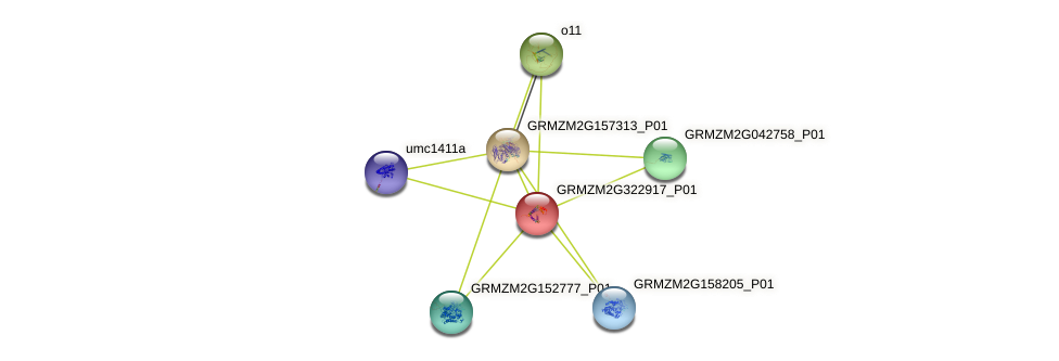 GRMZM2G322917_P01 protein (Zea mays) - STRING interaction network
