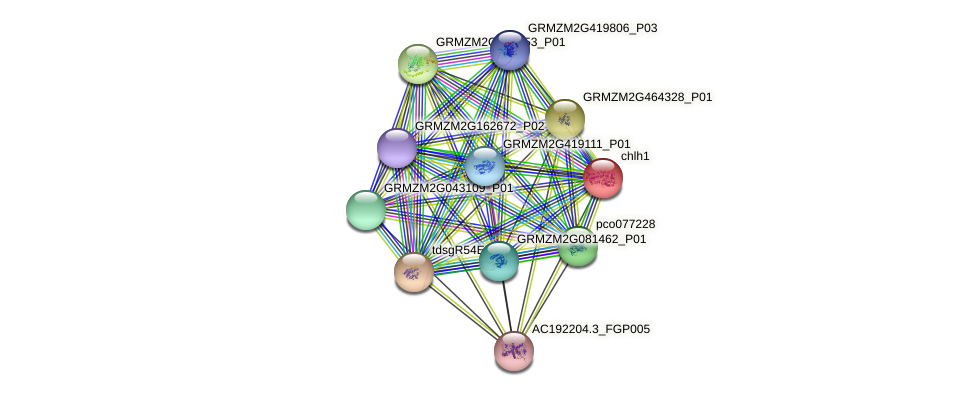 GRMZM2G323024_P01 protein (Zea mays) - STRING interaction network