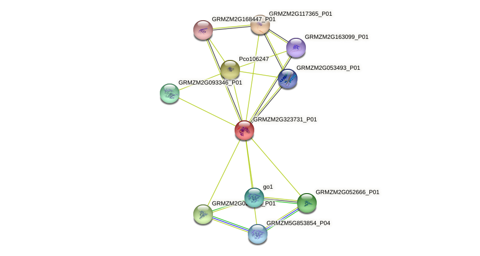 GRMZM2G323731_P01 protein (Zea mays) - STRING interaction network