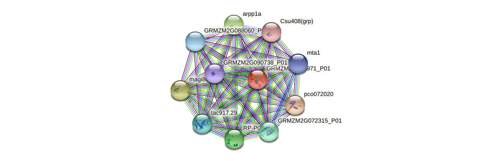 GRMZM2G323971_P01 protein (Zea mays) - STRING interaction network