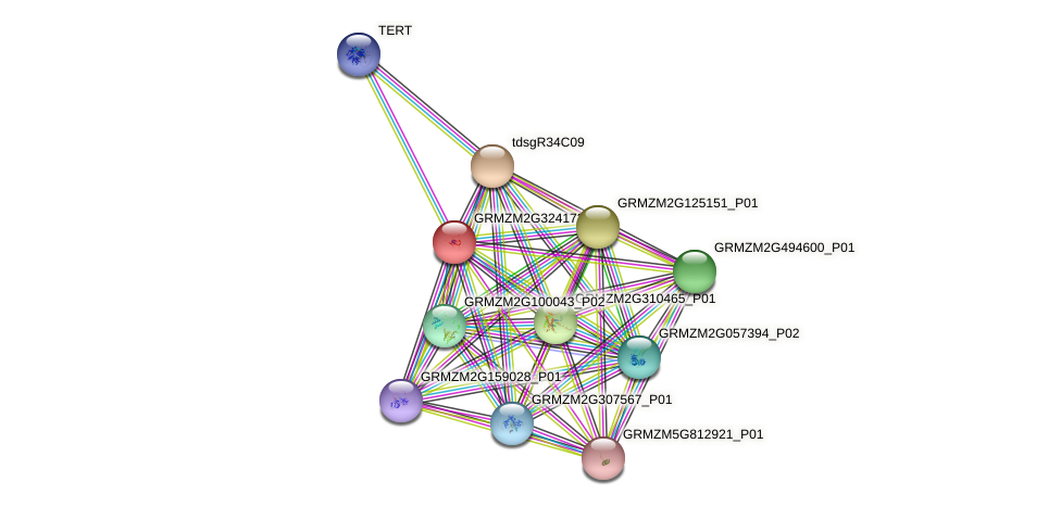 GRMZM2G324172_P01 protein (Zea mays) - STRING interaction network